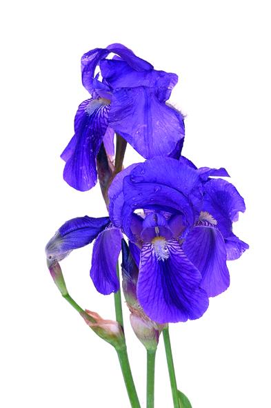 kaufen Gesichtpflegecreme Lilien