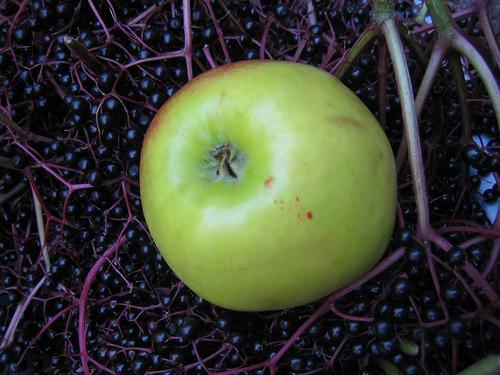 kaufen Apfel-Holunder-Saft klar