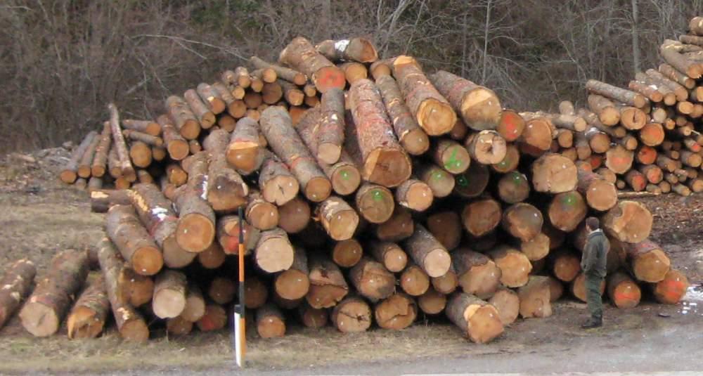 kaufen Zirbe PEFC - Neueingang Jan 2011