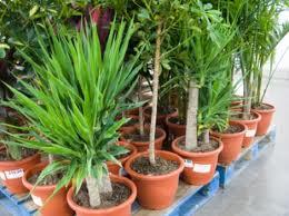 kaufen Pflanzen