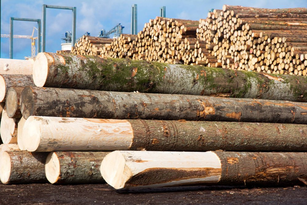 kaufen Закупка круглого леса