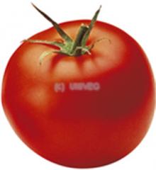 Tomaten Datterini
