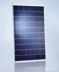 Solarmodul Schott Perform® Poly 250