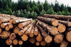 Покупка круглого леса