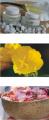 Venobis Madre Selva Anti Aging Creme