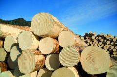 Закупка круглых лесоматериалов